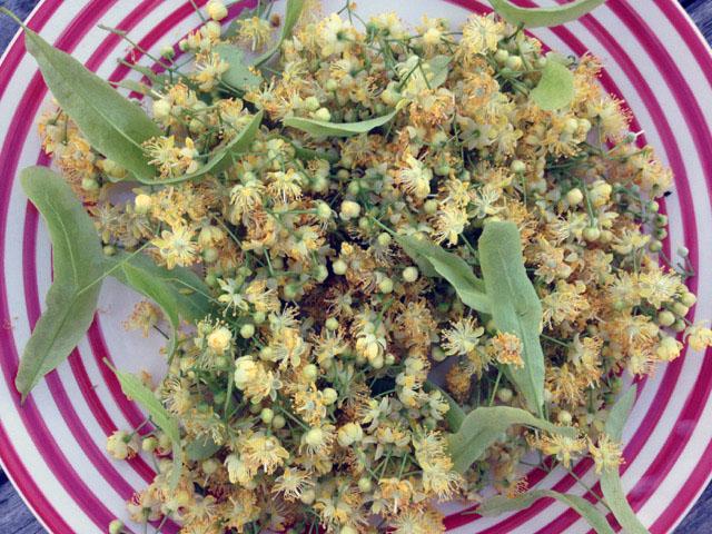 Lindenblüten mit Hochblatt