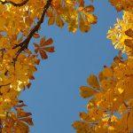 Herbstzeit ist Wildfrüchtezeit