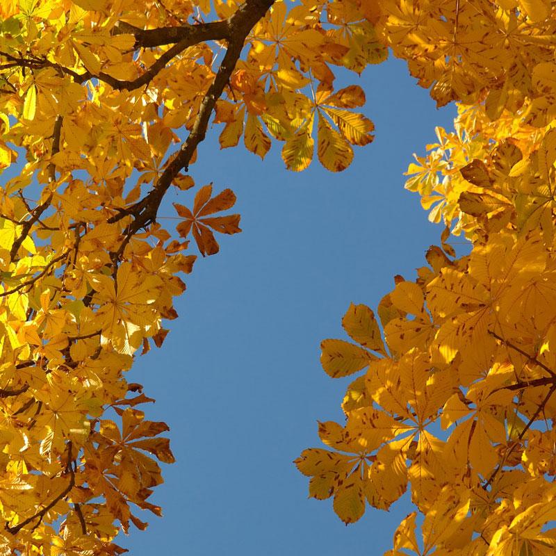 Herbstzeit Titel