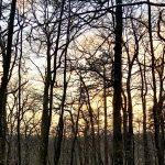 11 Wildkräuter, die man im Januar sammeln kann