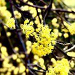 8 Pflanzen, die man zum Frühlingsbeginn im März und April ernten kann
