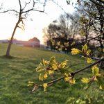10 brauchbare Wilpflanzen, die im April überall zu finden sind